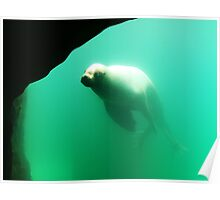 Floating Seal Poster
