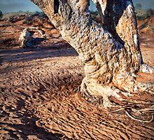 Kangaroo Tree by pbclarke
