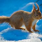 Red Squirrel on Ice by moonunit