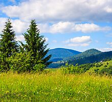meadow with in the mountains by pellinni