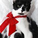 Hi, I am Lucky... Merry Christmas to you too! by Tamara Travers