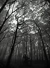 Scary Trees- Mount Lofty by Ben Loveday