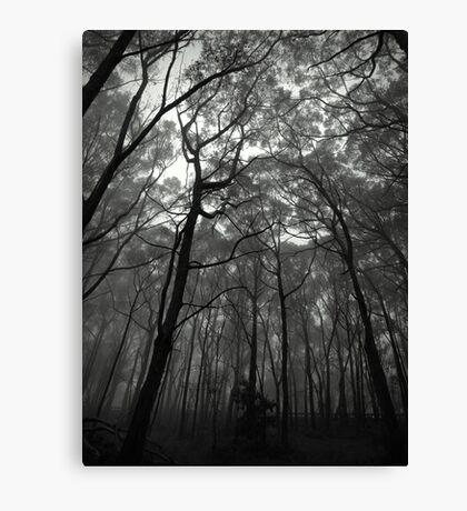 Scary Trees- Mount Lofty Canvas Print