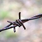 Barbed Wire by Maraya Verdonk