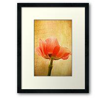 Anemone Coronaria Framed Print