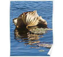 dried waterlily and reflection on lake in autumn Poster