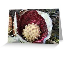Skunk Cabbage Spadix Greeting Card