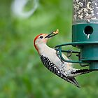 Woodpecker Grabs some Food by imagetj