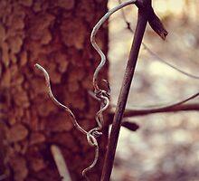 a fine vine by Jenyvive