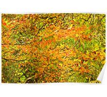 Autumn in Launceston 2013 Poster