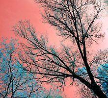 spring sky by Jenyvive