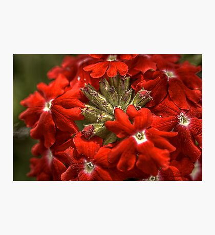 Aztec Ruby Photographic Print