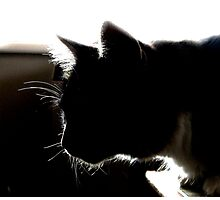 CAT SILHOUETTE Photographic Print