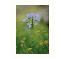 A Cuckoo flower emerges at Downton Abbey Art Print