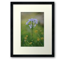 A Cuckoo flower emerges at Downton Abbey Framed Print