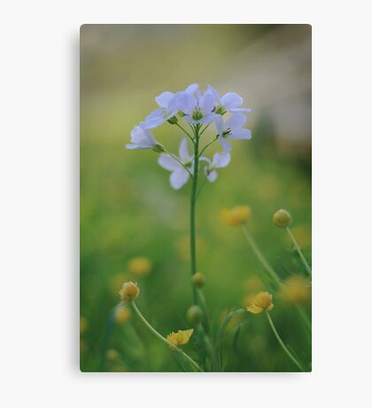 A Cuckoo flower emerges at Downton Abbey Canvas Print