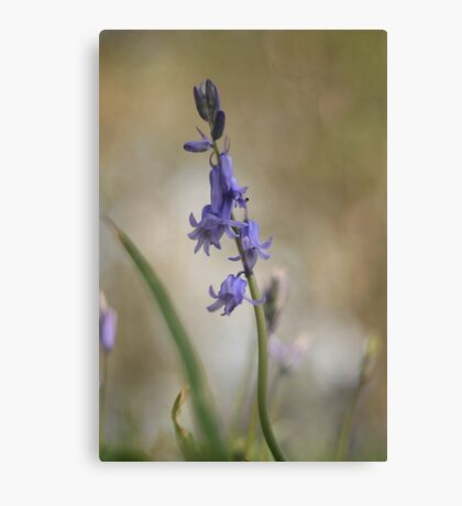 Early bloomers at Downton Abbey Canvas Print