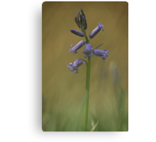 Breaking through, a bluebell at Downton Abbey Canvas Print