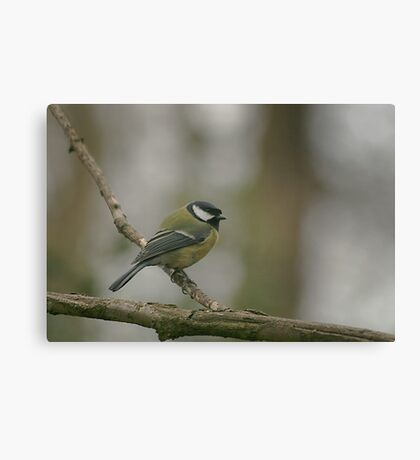 A great tit at Downton Abbey Canvas Print