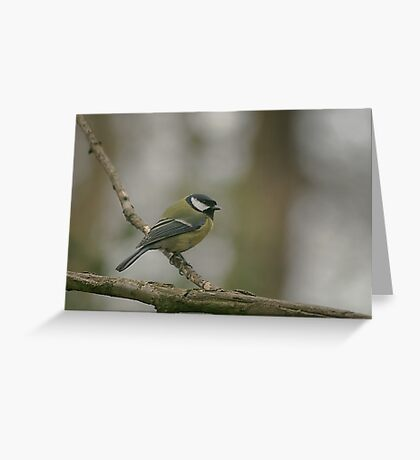 A great tit at Downton Abbey Greeting Card