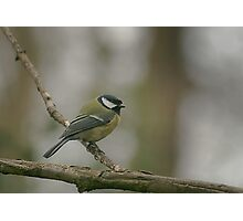 A great tit at Downton Abbey Photographic Print