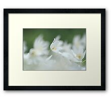 Wood anemone at Downton Abbey Framed Print
