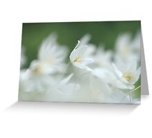 Wood anemone at Downton Abbey Greeting Card
