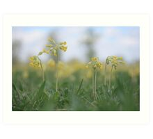 An emergence of cowslip at Downton Abbey Art Print