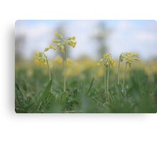 An emergence of cowslip at Downton Abbey Canvas Print