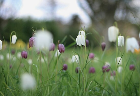 Wildflowers emerge at Downton Abbey by miradorpictures