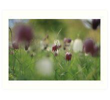 Meadow at Downton Abbey Art Print