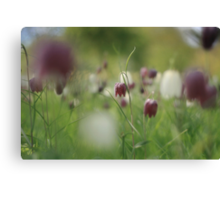 Meadow at Downton Abbey Canvas Print