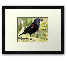 Chipper Red-Winged Bird Framed Print