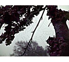 the web Photographic Print