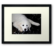 Mother's Day Gift - Pyrenees Mountain Dog Puppy Framed Print