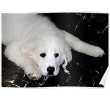 Mother's Day Gift - Pyrenees Mountain Dog Puppy Poster