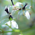 White Flowers by RichardPhoto