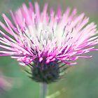 Pink Flower by RichardPhoto