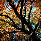 Fall Tree by Edie  Young O'Bryant