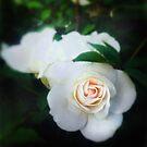 Pure Heart by Anne  McGinn