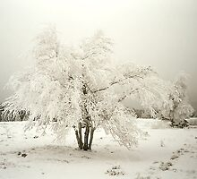 Winter Wonderland by Heike Richter