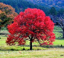 Red Tree by Edie  Young O'Bryant