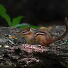 Chipmunk by Niamh Harmon