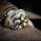 Upside Down Cat by jodi payne