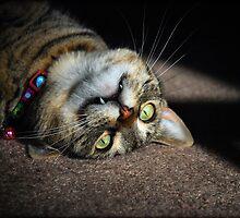 Upside Down Cat by jodi payne