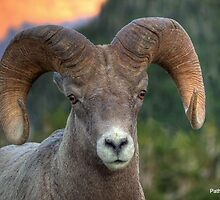 High Line Ram by JamesA1