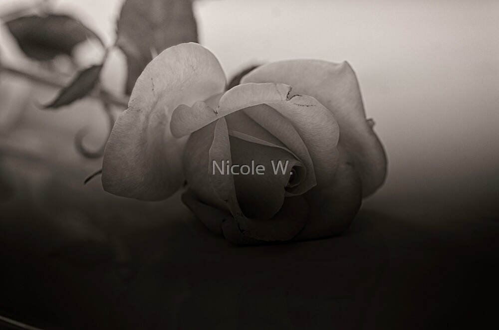 Untitled by Nicole W.