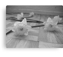 Grey Daffodils  Canvas Print