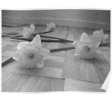 Grey Daffodils  Poster