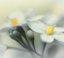 Fading flowers... by Bob Daalder